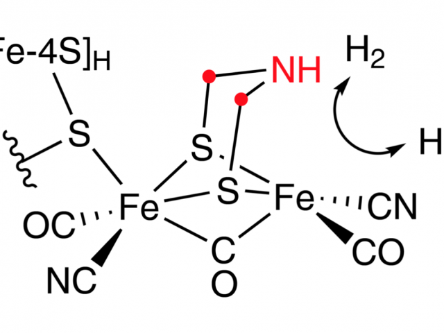 Hydrogenase active site with azadithiolate highlighted