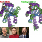 Structural ensembles of dark state (left) and photoproduct (right)